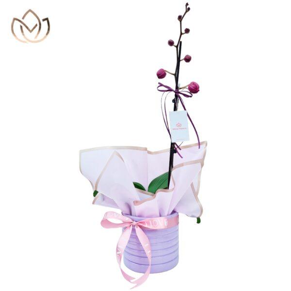 11 1 Marys Florería