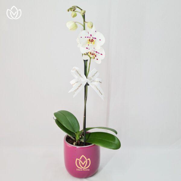 9 6 Marys Florería